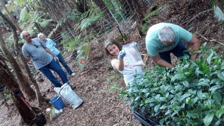 family working on tea farm